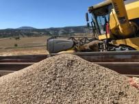 SELENYUM - 10 Bin Yıllık İza Buğdayı Yeniden Toprakla Buluşacak