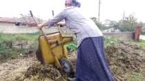 ÇİFTÇİLER GÜNÜ - Çiftçi 'Feride Abla'nın Azmi Takdir Topluyor