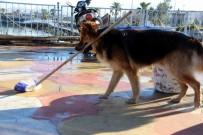 SUDAN - Elinden Her İş Gelen Köpek Herkesi Şaşırtıyor