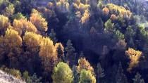 YENIKÖY - Gümüşhane'de Güz Renkleri Büyülüyor