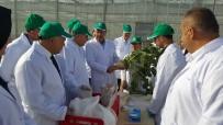 KAYSERİ ŞEKER FABRİKASI - Kayseri Şeker Ar-Ge Merkezi, Pancar Tohum Islah Çalışmasına Hız Verdi