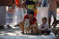 DOBERMAN - Marmaris'te Köpek Güzellik Yarışması Yapıldı