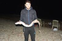 (ÖZEL) Oltayla 1,5 Metrelik Yılan Balığı Yakaladı