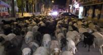 ALTUNTAŞ - Şehir Merkezinden Koyun Sürüsü Geçti