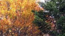 TELEFERIK - Uludağ Sonbahar İle Renklendi