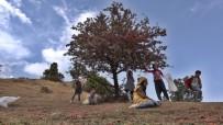 BERFIN - Çocuklar Dağ Bayır Gezerek Alıç Topladı