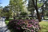 ATATÜRK - Çorlu Belediyesi Tarafından Yaptırılan Park Kafe Vatandaşlardan Tam Not Aldı