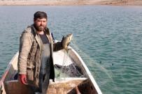 Denize Kıyısı Olmayan Yozgat'tan Avrupa Ve Orta Doğu Ülkelerine Balık İhracatı