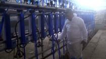 Devlet Desteği İle 'Saanen Irkı' Keçi Çiftliği Kurdu