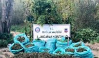 KURUSIKI TABANCA - Muğla'da 1,2 Milyon TL'lik Uyuşturucu Operasyonu