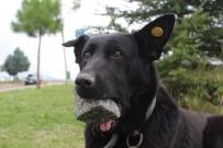 HAYVAN SEVERLER - Yavrularını Kaybeden Köpek, Ağzındaki Taşı Yavrusu Sanıyor