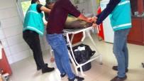 GİRESUN - Yaralı Karaca Tedavisinin Ardından Doğaya Bırakıldı
