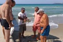 DENİZ KAPLUMBAĞALARI - Kuşadası Sahiline İki Deniz Kaplumbağası Vurdu