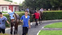 YARIŞ - Şanlıurfa'da Yarış Atı Ölümleri