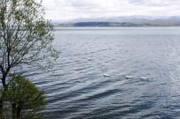 SAPANCA GÖLÜ - Sapanca Gölü'nün Seviyesi İyi Durumda