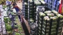 Muz Üreticilerinden Enflasyonla Mücadeleye Destek