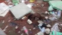 Sulama Havuzunda Mahsur Kalan Sansarı Vatandaşlar Kurtardı
