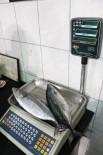 BAYRAM YıLMAZ - Tanesi 1 Kilo 300 Gram Gelen Palamut 15 TL'den Satılıyor
