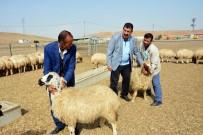 TARıM İŞLETMELERI GENEL MÜDÜRLÜĞÜ - TÜDKİYEB Genel Başkanı Çelik, 300 Koyun Projesi'ne Start Verdi