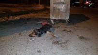 Osmaniye'de Köpek Katliamı
