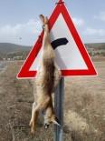 YENIKÖY - Tilkiyi Trafik Levhasına Astılar