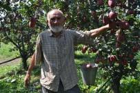 ZEYTİN YAĞI - 75 Yaşındaki Dede Gençlere Taş Çıkartıyor