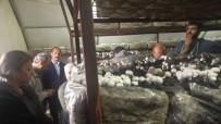 Erzincanlı Çiftçiler Tarım Fuarına Katıldı