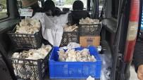 İSTIRIDYE - İstiridye Mantarı Üretimi Sevindiriyor