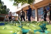 İznik'te Üretilen Kabaklar Yurt Dışına İhraç Ediliyor