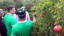 TARıM BAKANı - Özbekistanlı Heyet Aydın'ın Tarımını İnceledi