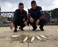 GALATA - (Özel) Galata Köprüsü Değil Boğulca Deresi