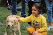 YAVRU KÖPEK - Barınaktaki Yavru Köpekler Yeni Yuvalarına Kavuştu