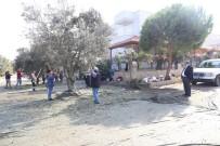 BÜYÜKŞEHİR YASASI - Burhaniye Belediyesi Zeytin Hasadına Başladı