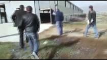TARıM - Denizli'de Aç Bırakıldığı İddia Edilen 150 Keçi Telef Oldu
