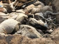 TARıM - Denizli'de Aç Bırakıldığı Öne Sürülen Keçiler Telef Oldu