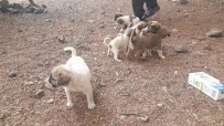 KÖPEK YAVRUSU - Sokağa Bırakılan Köpek Yavruları İle Birlikte Not Da Bulundu