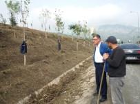 VEZIRHAN - Vezirhan'da Ağaçlandırma Çalışmaları Devam Ediyor