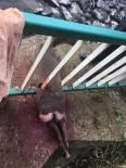 Dere Kenarındaki Demir Korkuluklara Sıkışan Karaca Köpeklerin Saldırısına Uğradı