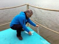 BALIK TUTMAK - Doğa Yürüyüşünde 120 Bin Pullu Sazan Balığı Suyla Buluşturuldu