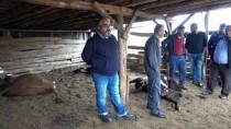 Kırıkkale'de 17 Büyükbaş Hayvan Telef Oldu