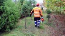 Ağaçlara 'Cerrah Hassasiyeti'yle Dokunuş