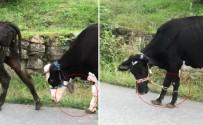 Hayvanlara Yürek Burkan Eziyet