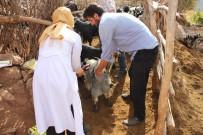 Kadın Veteriner, Hayvanlar İçin Sarp Kayalıkları Geçiyor