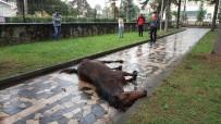 YAĞAN - (Özel) Çocuk Parkına Terk Edilen At Çocukların Gözleri Önünde Çırpına Çırpına Can Verdi