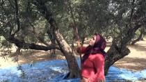BÜLENT UYGUR - Yağışların Az Olması Hatay'daki Zeytin Rekoltesini Düşürdü