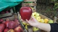 ERICEK - Dev Elmalar Görenleri Şaşırtıyor