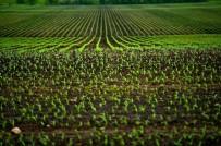 İncefikir Açıklaması 'Toprak Analizi Rekolteyi Arttırıp, Giderleri Azaltır'