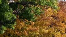 KUŞBURNU - Kars Sonbaharda Bir Başka Güzel
