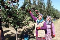 Köyde Birleştirilen Tarlalar Göçü Önleyip, İşsizliği Bitirdi