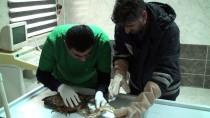 Ağrı'da Yaralı Halde Bulunan Erguvani Balıkçıl Tedavi Altına Alındı